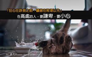 6996513-funny-kitten