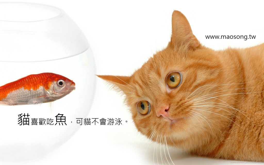 cat-and-golden-fish