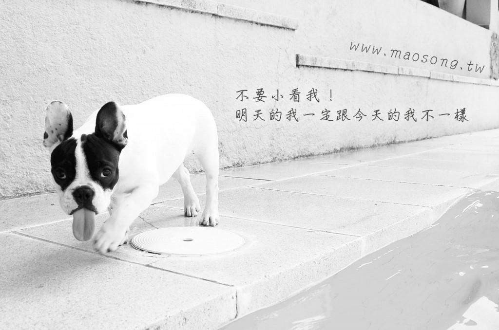 dog-115078_1280