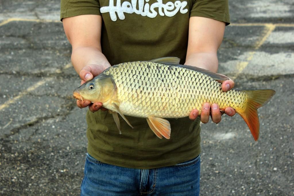 fishing-347459_1920
