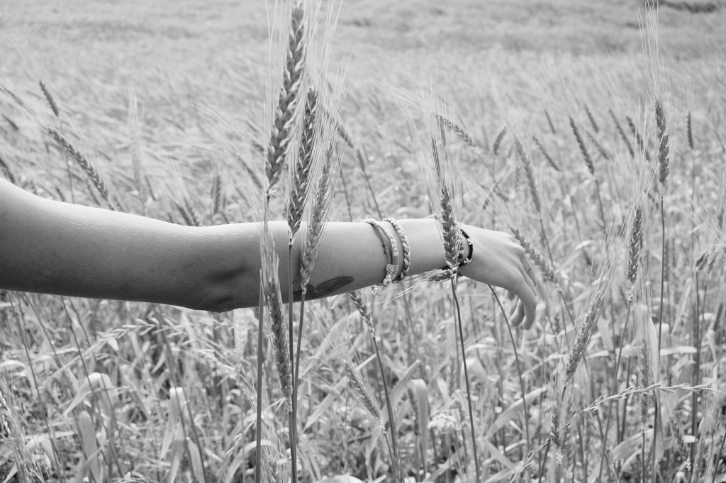 2015-06-Life-of-Pix-free-stock-photos-arm-black-white-wheat-santalla